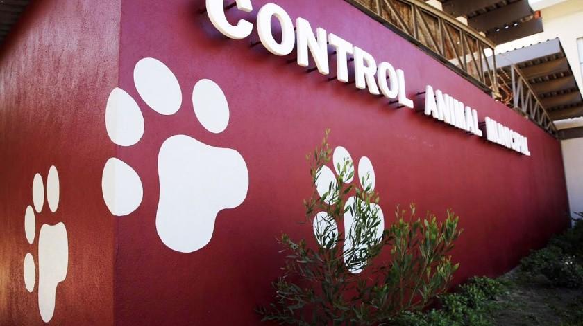 Se trata de un espacio en el que profesionales del área veterinaria brindarán atención a mascotas.(Cortesía)