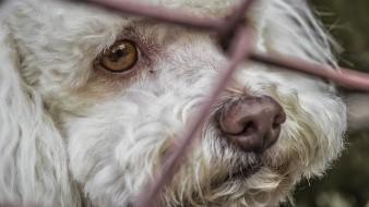 Piden castigar con 5 años de cárcel a quien torture perros