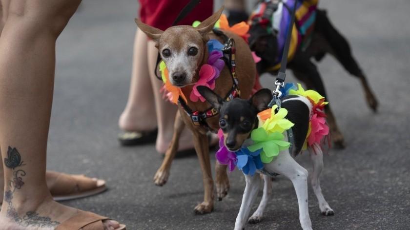Docenas de perros se divirtieron en el desfile.(AP)