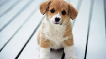 Los cachorros suelen tener más actividad por las mañanas y por las noches.