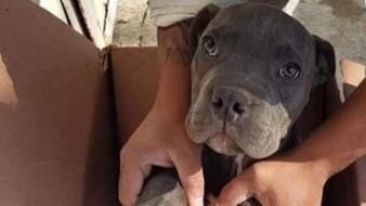 Niño da a su perrito en adopción porque su papá lo maltrataba
