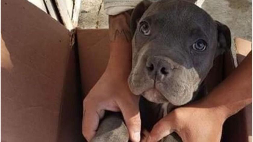Niño da a su perrito en adopción porque su papá lo maltrataba(Facebook)