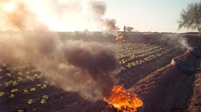 Los agricultores recurren a la quema de materiales para aminorar los efectos del frío e sus cultivos.(Banco Digital)