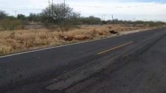 Accidente carretero deja una decena de lesionados y 3 caballos muertos
