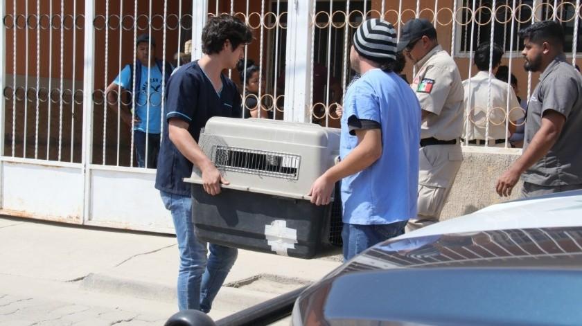 El menor murió tras ser atacado por el perro de raza pitbull.(Agencia Reforma)