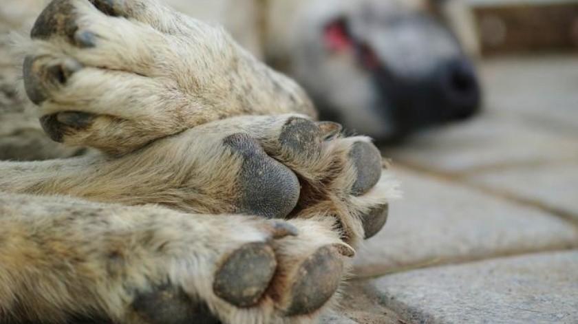 Asegura mataron a sus perros en San Pedro(Redes sociales)