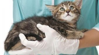 Una creencia popular es el cambio de personalidad en nuestras mascotas después de esterilizarlas.