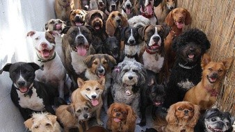 La esterilización no sólo contribuye a controlar la sobrepoblación de los animales de compañía, también tiene múltiples beneficios para la salud de tu mascota.