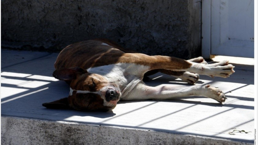 Invitan a adoptar mascotas en Agua Prieta(GH)