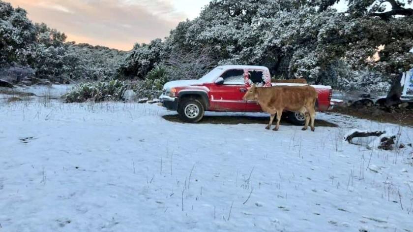 El medio El Heraldo de Chihuahua indicó que la acumulación de nieve hasta el momento es de cinco centímetros de espesor en Madera, Bocoyna y Urique.