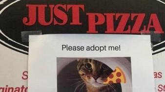 La pizzería muestra la foto y datos de tanto perros como gatos además de los datos de la SPCA.