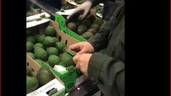 Tal es el sorprendente caso en el que utilizaron aguacates para meter la cocaína dentro de la fruta.