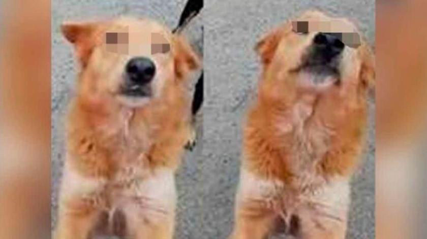 Por abuso a perrita Lyla, FGJE ejercerá acción penal contra responsable