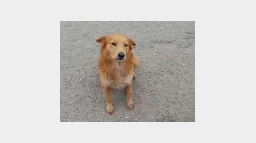 La perrita Lyla recibió atención en una clínica veterinaria y su propietaria interpuso una denuncia ante la FGJE por maltrato animal.