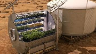 Lechuga cosechada en el espacio es igual de nutritiva que la terrícola, según la NASA
