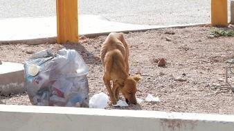 Capturan a la semana 50 perros callejeros