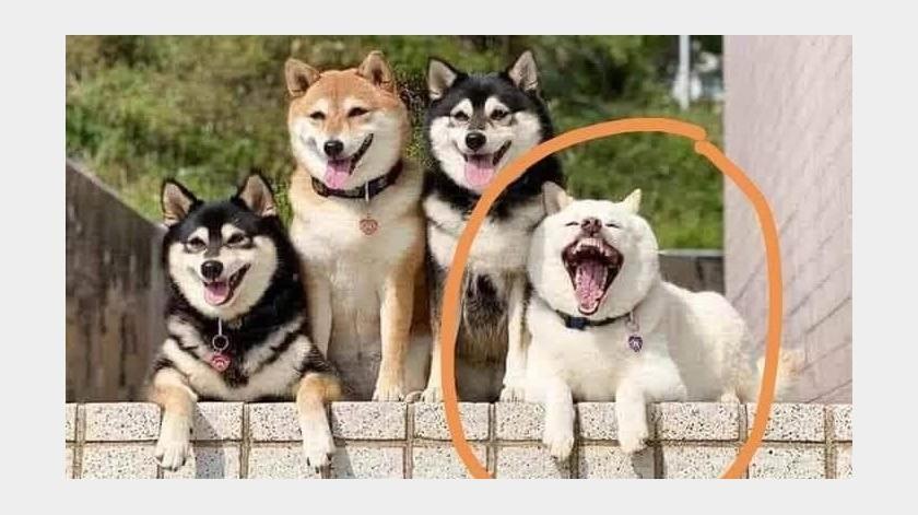 Un gracioso perrito no quería posar en una sesión de fotos.(Facebook)