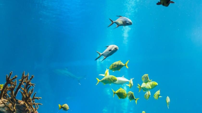 El acuario compartió en sus redes sociales varios videos cómo una pareja de esas aves marinas hacen un recorrido por los pasillos vacíos del centro.(Pixabay.)