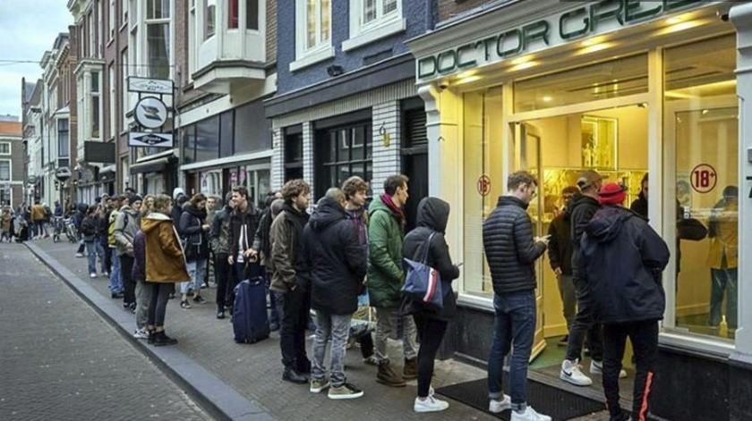 COVID-19 desate la compra de hierba en Holanda(Tomada de la red)