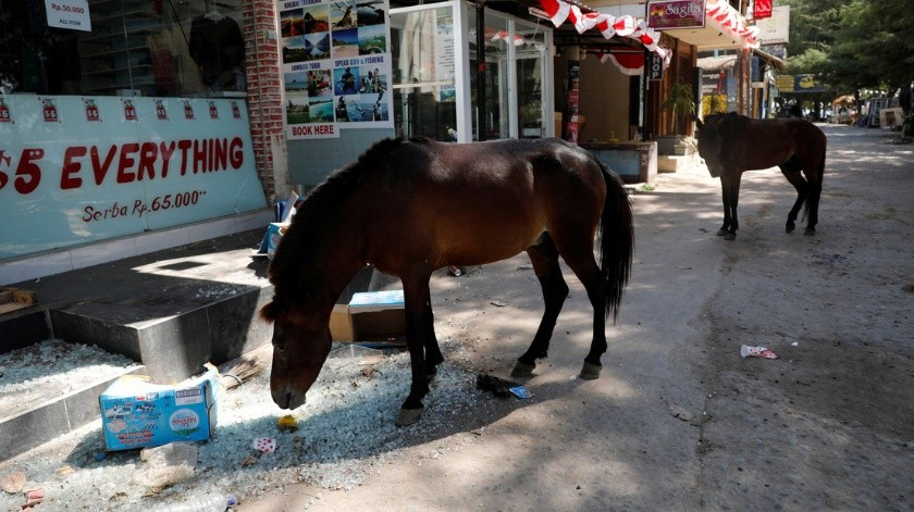 VIDEO: Manada de caballos corre sin control en una avenida de Bogotá(Beawiharta / Reuters)