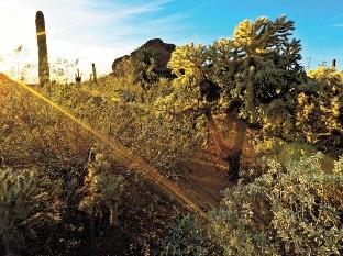 Mensaje del Jardín Botánico del Desierto: Coronavirus / COVID-19