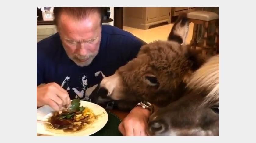 En uno de los videos se ve como interactúa con ambos animales y le comparte muestras de cariño.(Capture)