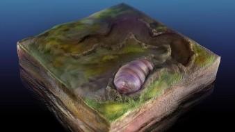 Ancestro de todos los animales estaría en un fósil de Australia