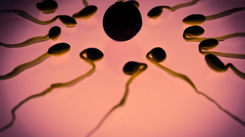 Según la Sociedad Americana de Medicina Reproductiva, la infertilidad afecta a hombres y mujeres por igual, y la calidad del semen es un indicador clave de la fertilidad masculina.(Pixabay.)
