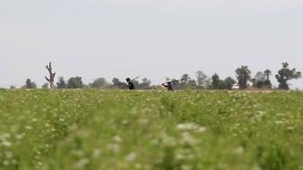 Trabajadores del campo en USA portan permisos especiales