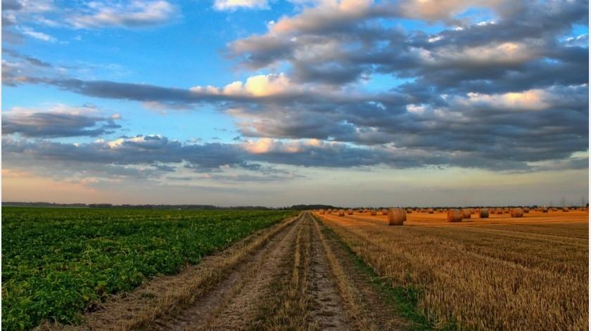 En esta tarea, se fortalecerá la relación con el Consejo Nacional Agropecuario (CNA) y la Asociación Mexicana de Secretarios de Desarrollo Agropecuario (AMSDA).(Pixabay-Ilustrativa.)