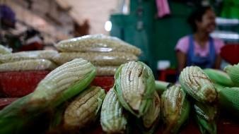 C�maras mexicanas aprueban una ley para fomentar y proteger el ma�z nativo