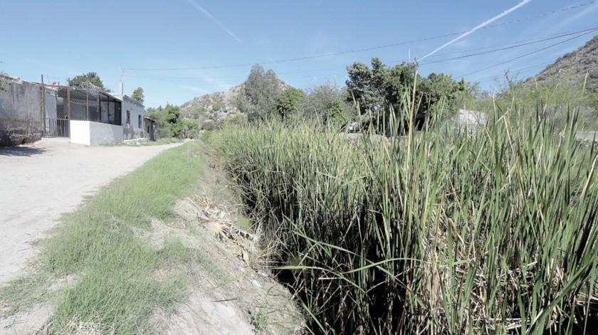 Piden vecinos limpiar canal lleno de maleza(Teodoro Borbón)