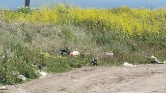 El cadáver fue encontrado en un camino de terracería.