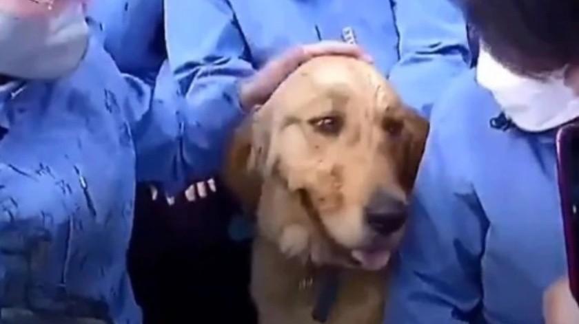 Perro se niega a separarse de los médicos que lo cuidaron durante cuarentena
