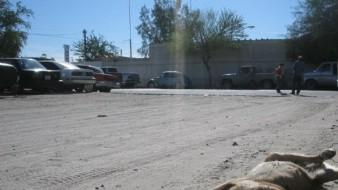 Agresiones y atropellos a canes han disminuido en Hermosillo: Jorge Zepeda