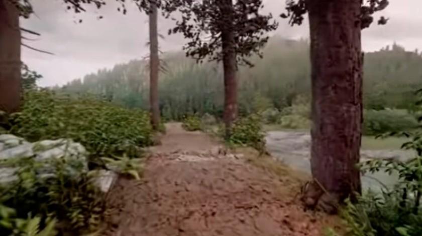 Este bosque está hecho por un jugador en Dreams para PS4