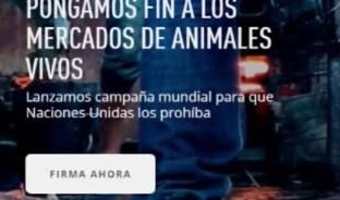 Inician campaña mundial, para exigir a Naciones Unidas la prohibición de mercados de animales vivos, por ser posible origen de virus mortales como el coronavirus.