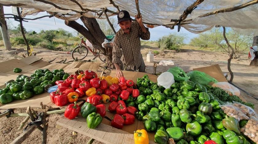 Rosalío Fierro Fierro ha tenido éxito con la venta de chile morrón.(Gamaliel González)