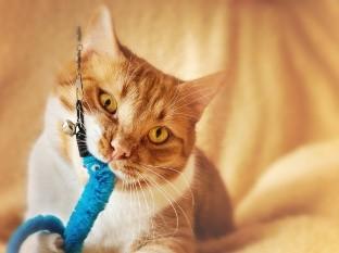 Un gato y su dueño se unen a un reto de baile y conquistan TikTok