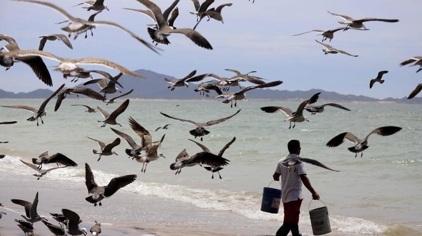 En las playas sólo se observa a los pescadores y las gaviotas.(Julián Ortega)