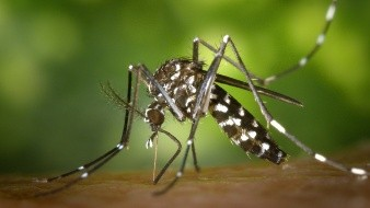 Invasión a fauna silvestre, causante de virus como ébola, coronavirus y zika: UNAM