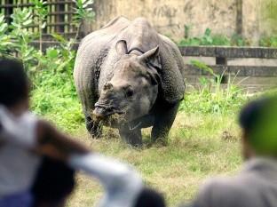 VIDEO: Rinoceronte persigue a un hombre que no respetó la cuarentena