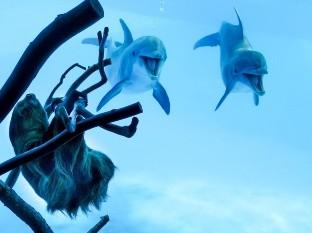 La expresión de estos delfines al ver por primera vez a un perezoso