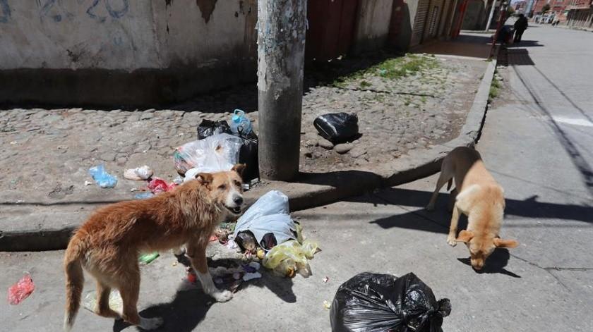 Proteger animales ante pandemia: reto asumido por ciudadanos