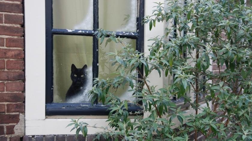 Estudio revela que los gatos sufren de ansiedad al separarse de sus dueños(Pixabay)