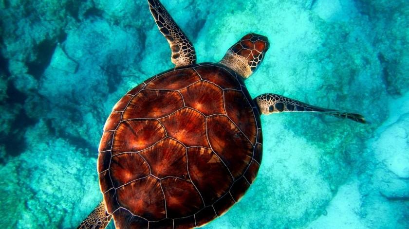 Otro día ligado al de hoy es el Día Mundial del Medio Ambiente, el cual se celebra el 5 de junio.(Pixabay)