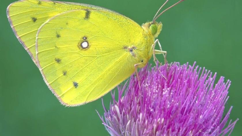 Desde abejas y otros polinizadores cruciales para el suministro mundial de alimentos, hasta mariposas que embellecen lugares.(AP)