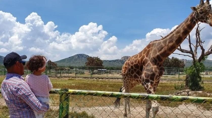 Zoológico de Hidalgo pide donativos para alimentar animales tras cierre por Covid-19(Facebook/TuzoofariOficial)