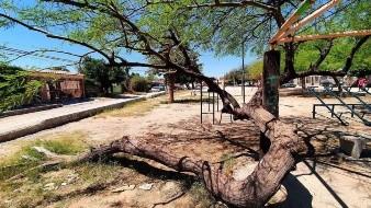 Lagarda Vásquez reiteró que continuarán los valores superiores a los 40 grados, situación que es normal en algunas zonas del Estado, tal como en Hermosillo.