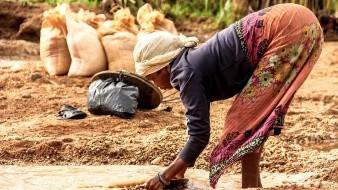 OMS rechaza planta medicinal que emplea Madagascar contra el Covid-19